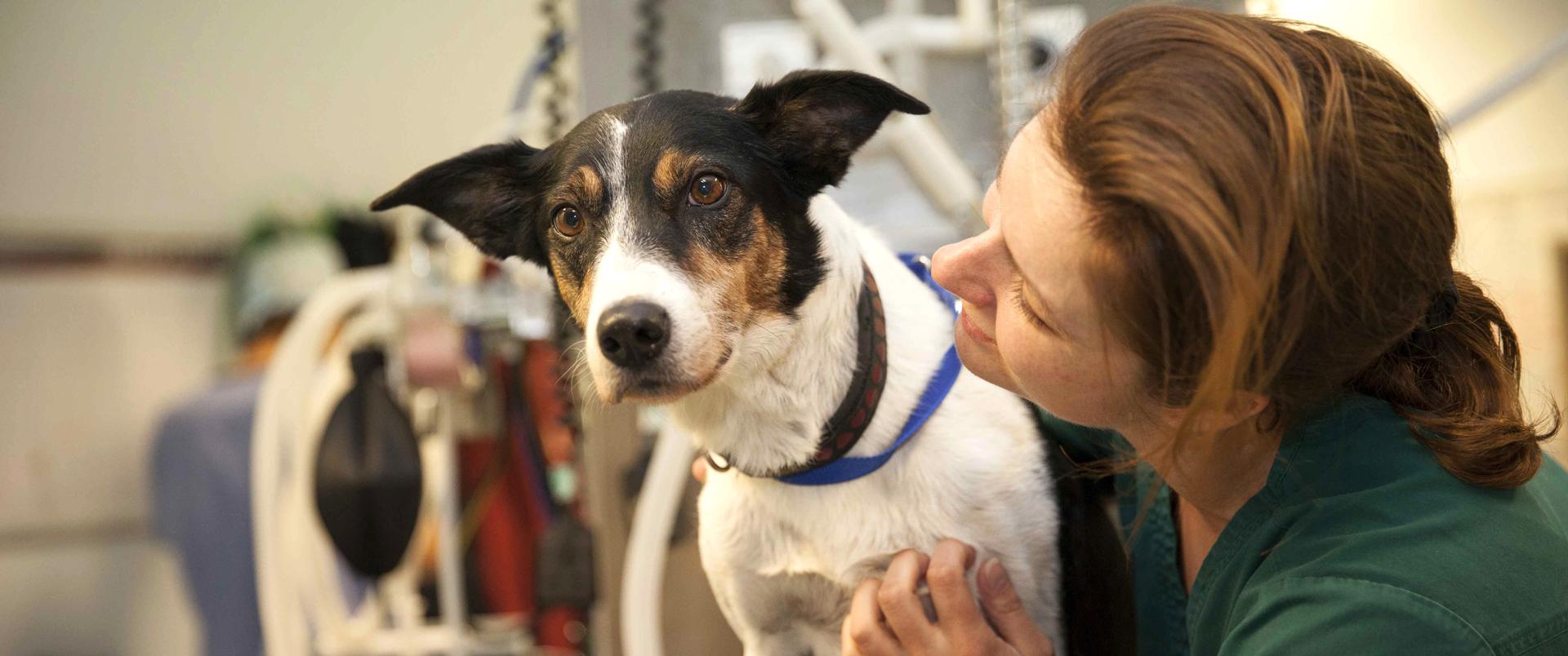 Veterinary surgeon with dog